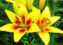 Как вырастает новый цветок?
