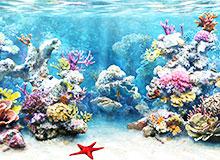 Что такое коралловый риф?