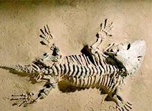 Где были найдены первые ископаемые?