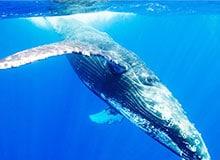 Какое животное самое большое в мире?
