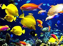 Сколько видов рыб обитает на планете?