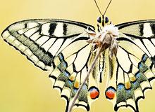 Сколько видов насекомых существуют в природе?