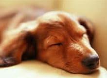 Видят ли собаки сны?