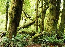 Что такое тропические ливневые леса?