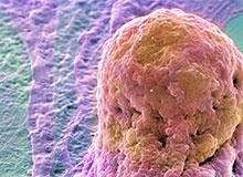 Как устроена клетка человека?