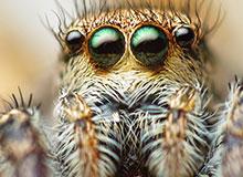 Как работают глаза животных. Чем видят мир животные без глаз.