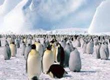 Существует ли жизнь в Антарктиде?