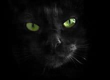 Светятся ли глаза животных в темноте?