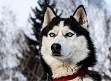 Откуда взялись различные породы собак?