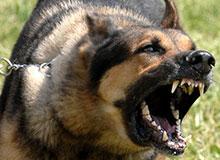 Что может свести собаку с ума?