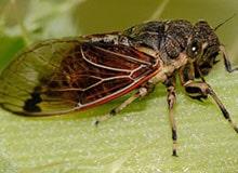Какое насекомое живет дольше всех?