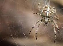 Зачем пауку паутина?