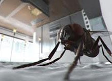 Как удается мухе ходить по потолку?