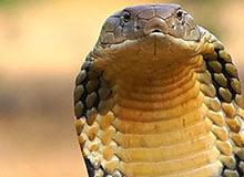 Какая змея самая смертоносная?