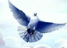 Как голуби находят дорогу домой?