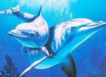 Как спят дельфины?