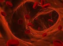 Чем занимается кровь в организме?