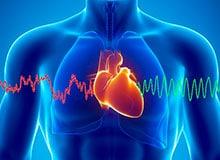 Как работает сердце?