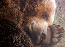 Почему некоторые животные спят зимой?