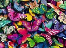 В чем отличие между ночными и дневными бабочками?