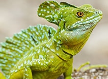 Что такое рептилия?