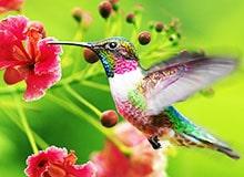 Почему у колибри замечательный аппетит?