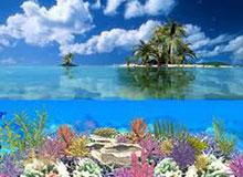 Что такое коралловый остров?