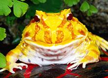 Какая разница между жабой и лягушкой?