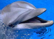 Возможен ли диалог людей с дельфинами?