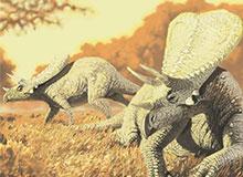 Что мы знаем о вымерших животных?