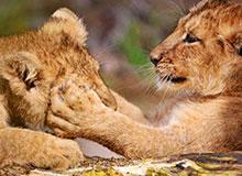 Поддаются ли животные обучению?