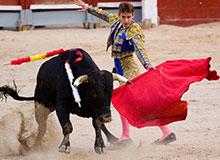 Что выводит быка из себя?