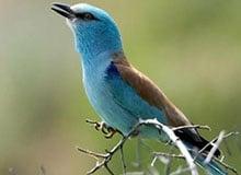 Для кого поют птицы?
