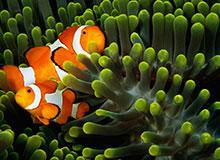 Почему некоторые животные выглядят как растения?