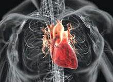 Для чего человеку сердце?