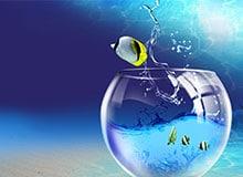 Что такое аквариум?