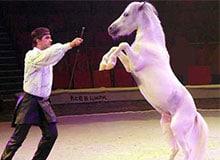 Когда в России появился цирк?