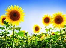 Как найти солнце за тучами?