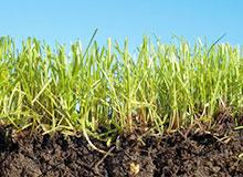 Как образовалась почва?