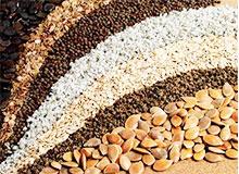 Что такое семена?