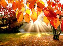 Почему осенью листья окрашены по разному?