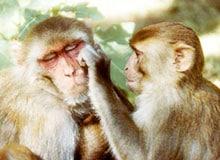 Понимают ли животные друг друга?