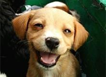 Могут ли животные плакать или смеяться?