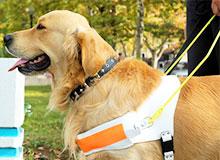 Как тренируют собак-поводырей?