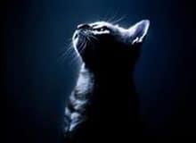 Может ли кошка видеть в темноте?