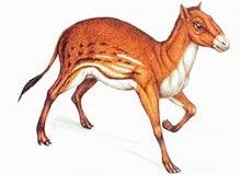 От какого животного произошла лошадь?