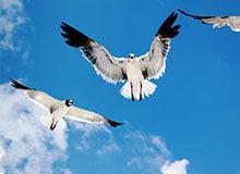 Как птицы находят путь домой?