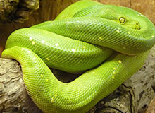 Какая самая большая змея в мире?