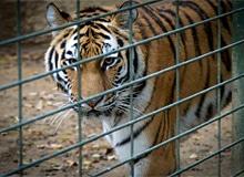 Кто основал первый зоопарк?