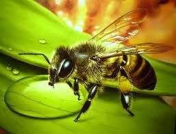 Умирает ли пчела, укусив?
